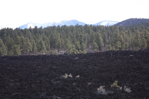 Lava fields - Sunset Crater