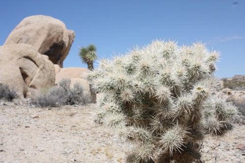 Rock and Cacti